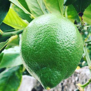 concentrado de limon ecologico y organico