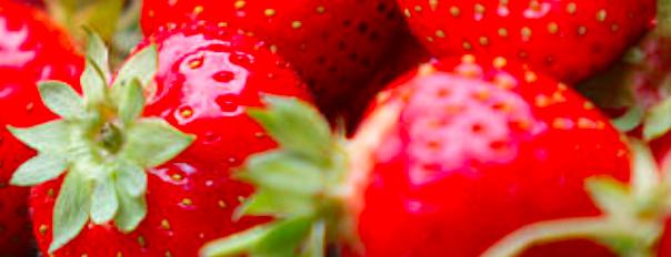 concentrado de fresa 65 brix