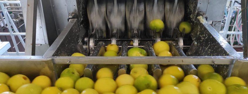 concentrado de limon proveedor y distribuidor