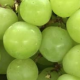 white grape juice concentrate manufacturer and supplier