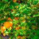 zumo de naranja NFC fabricante y distribuidor